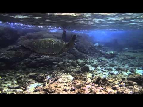 Snorkeling - Richardson Beach Park - Hilo Hawaii