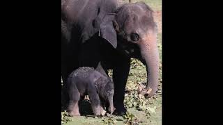 OKC Zoo welcomes new baby elephant