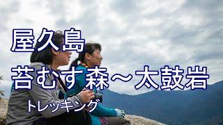 屋久島 苔むす森~太鼓岩 白谷雲水峡(後半)トレッキングガイド