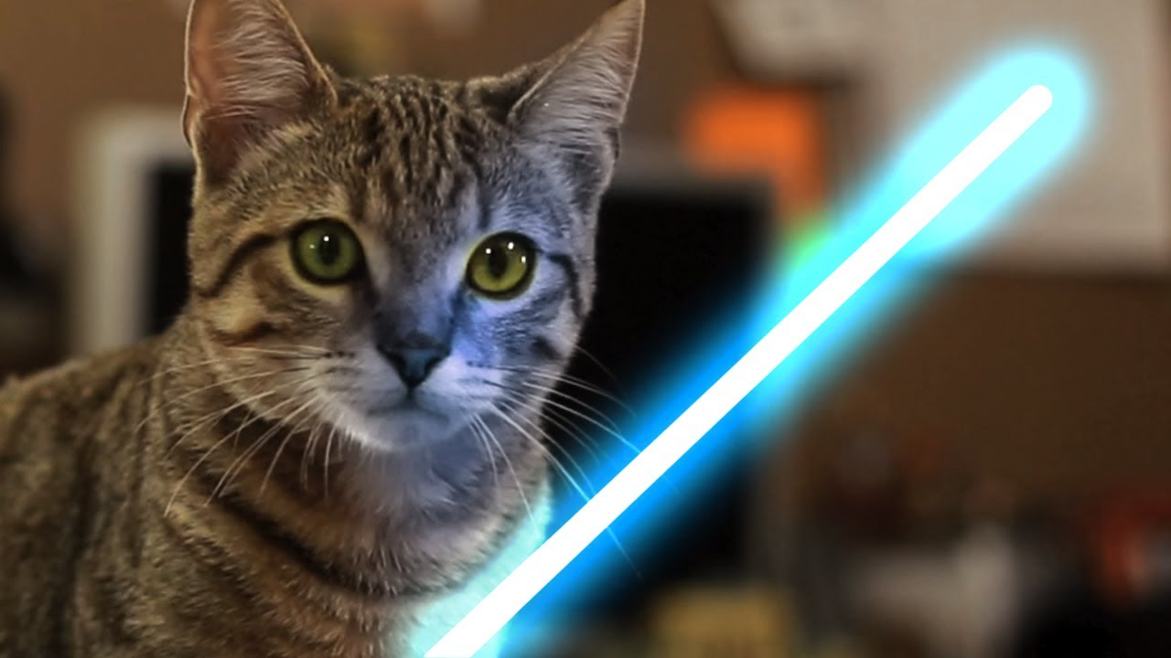 Funny Cats Fourth Be With You