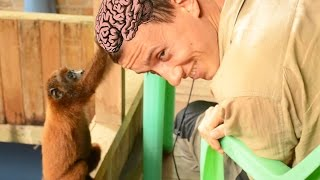 Обезьяна ест мозги| Амазонка| ПЕРУ(В этом видео вы увидите как обезьяна ест мозги, как ленивец сидит на голове, а так же мы покатаемся по приток..., 2016-12-05T10:19:44.000Z)