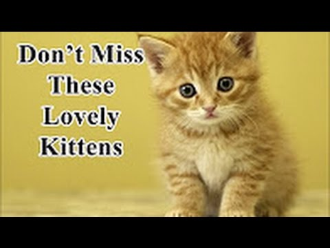 Newborn kittens -  Newborn kittens cry when mom is away  - Super Cute and Funny Kitten Moments #4