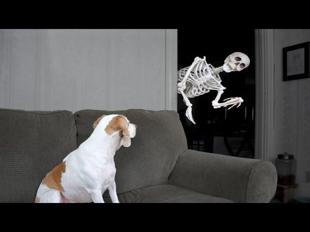 Halloween Prank: Skeleton Scares Dog