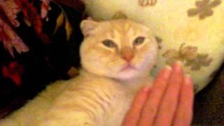 кот спит с открытыми глазами ))))) Ржач