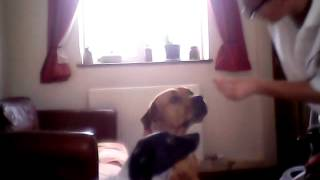 How To Teach A Dog How To Do A High Five