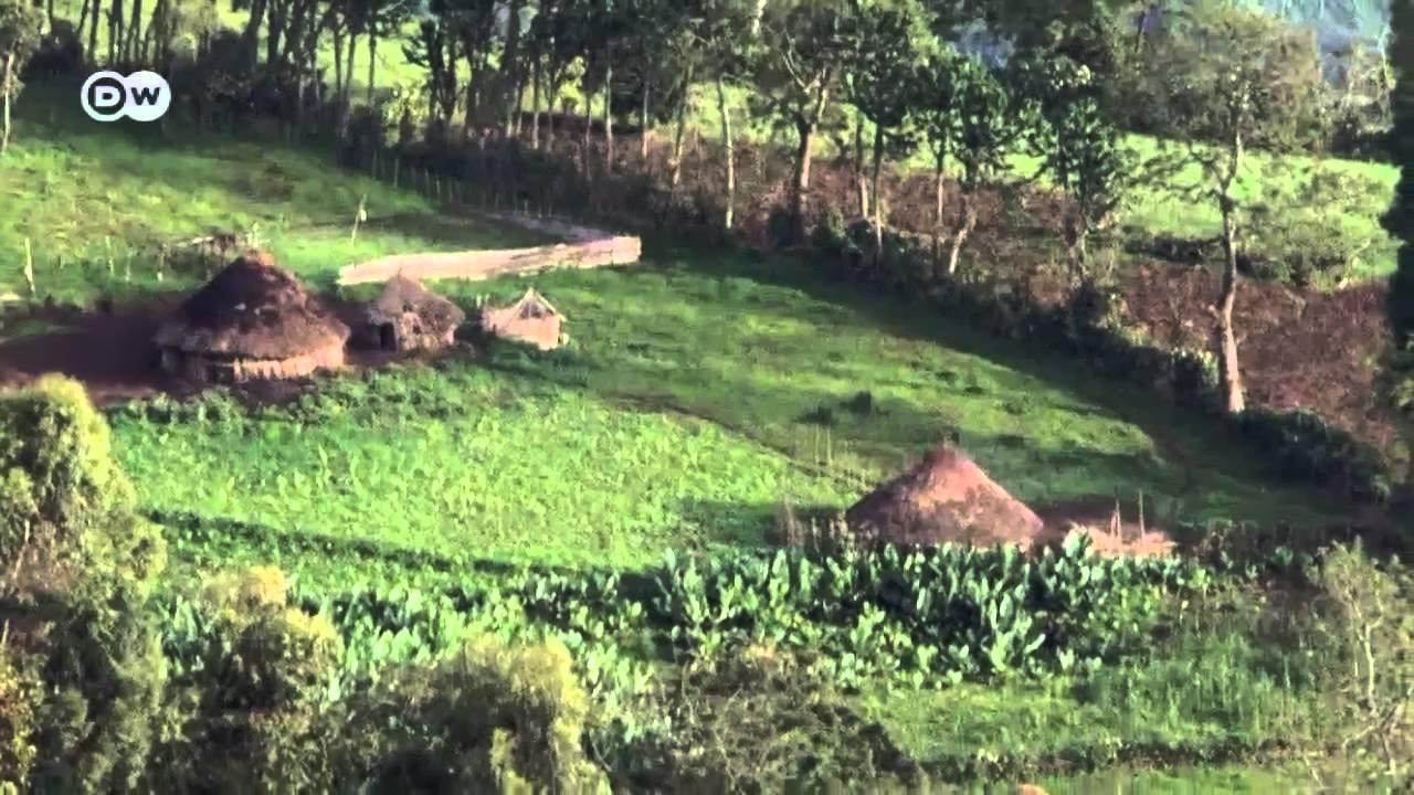 Ethiopia's rare mountain lions