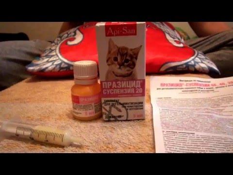 Лечение глистов у кошек.Суспензия Прозицид.Гульмира Сынбулатова. Кумертау