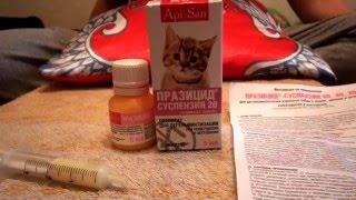 Лечение глистов у кошек .Суспензия Прозицид .Гульмира Сынбулатова. Кумертау