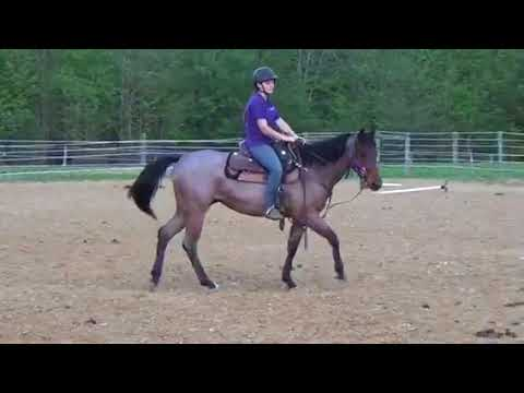 Sprinkles N MyFrosty - Riding