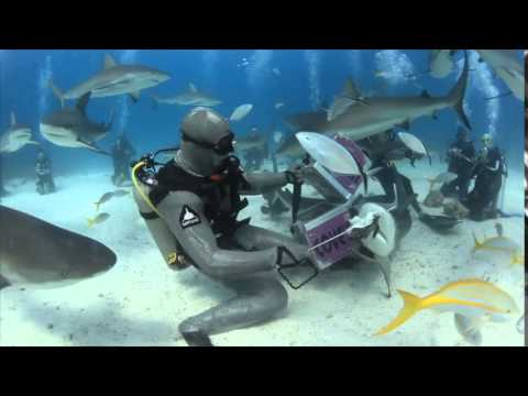 Shark Dive with Stuart Cove's in Nassau Bahamas