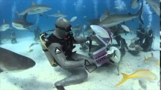 Video Shark Dive with Stuart Cove's in Nassau Bahamas download MP3, 3GP, MP4, WEBM, AVI, FLV Agustus 2018