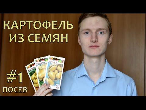 POTATOES from TRUE SEEDS (1). Как вырастить элитный картофель из семян (1). ПОСЕВ