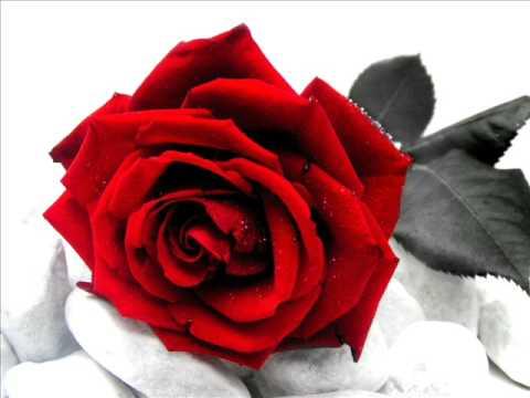 rose rosse - massimo ranieri