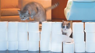 Cats vs Toilet Paper Wall Compilation