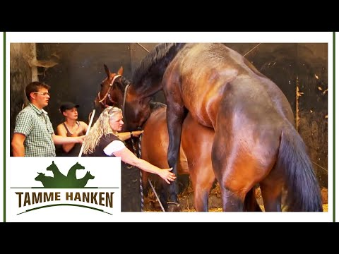 Der Hengst darf ran | Tamme Hanken | Kabel Eins from YouTube · Duration:  4 minutes