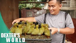 How to start duck farm business?
