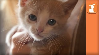 Cutest Shy Rescue Kitten Is A Beautiful Angel  Kitten Love
