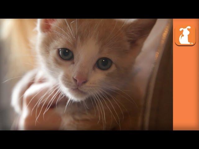 Cutest Shy Rescue Kitten Is A Beautiful Angel - Kitten Love