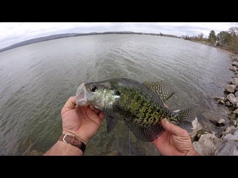 Crappie fishing with live minnows lake guntersville for Crappie fishing with minnows
