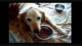 無料で犬のしつけをしたければ→ http://www.oshi510.com/pet/ 犬 子犬 ...
