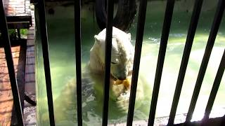 Белый медведь Уд на рыбалке.