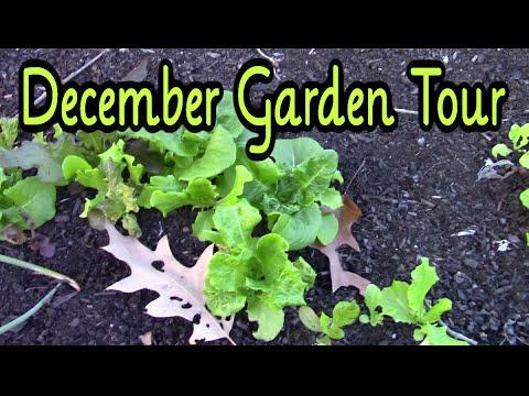 December Garden Tour Zone