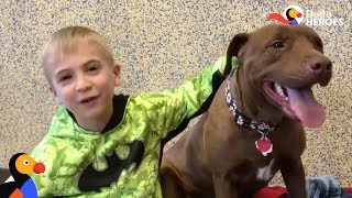 Little Boy Has Saved HUNDREDS Of Shelter Dogs | The Dodo Heroes