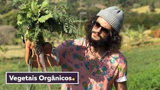 FAZENDA DE ORGÂNICOS + VEGETAIS ASSADOS COM MOLHO | Pequenos Produtores | Temporada de Inverno