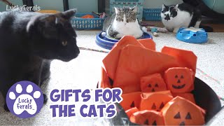 Pets For Splash, Mail Time, Halloween Gifts For The Cats * S4 E65 * Cat Vlog