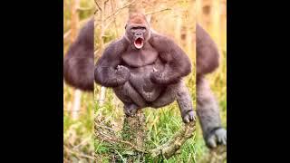 Приколы с животными веселые обезьяны