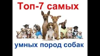 Топ 7 самых умных пород собак