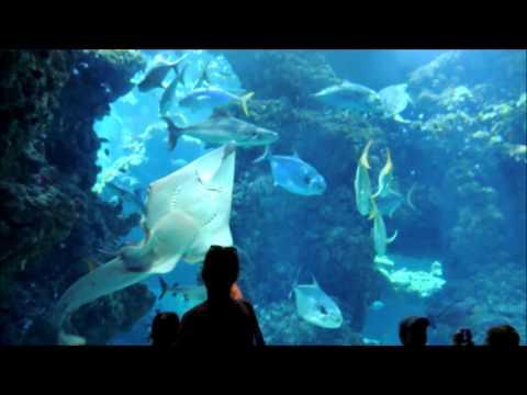 Monaco Oceanographic Institute Aquarium