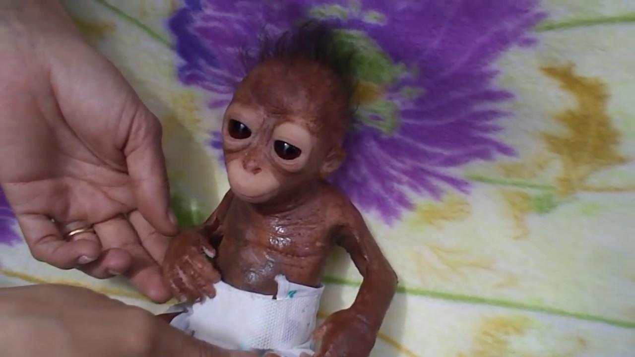 Mil 249 The Sweet Baby Monkey Youtube