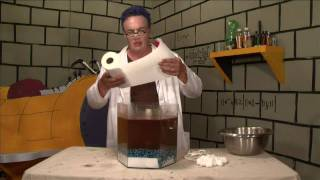 Oil Spill Clean Up Experiment