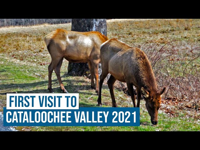First Visit to Cataloochee Valley 2021