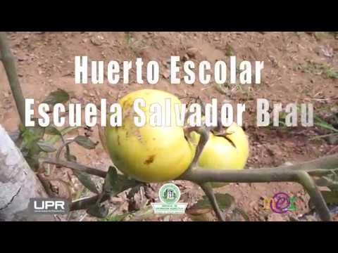 Huerto Escolar Escuela Salvador Brau