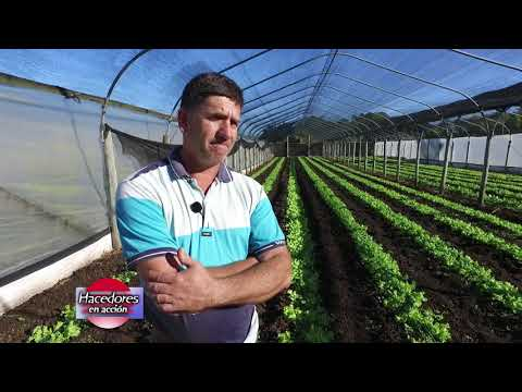Cesar Machello - Productor Hortícola - Producción de verduras de hoja