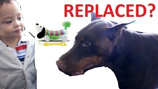 Toddler Gets A New Toy Puppy And This Red Doberman Pinscher Hates It! Kid Videos Funny
