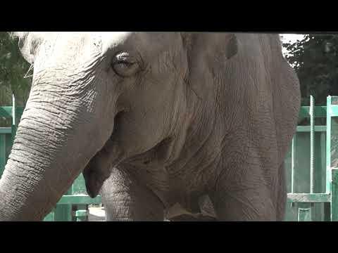 Телерадиокомпания «ГРАД»: Самая большая обитательница Одесского зоопарка отметила свой День рождения