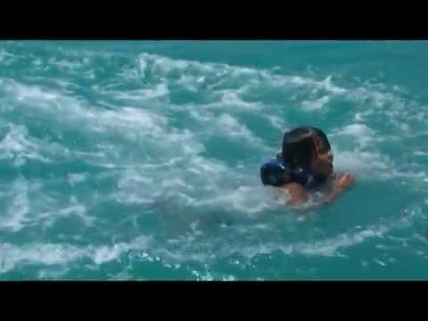 Cayman Islands Dolphin Adventure