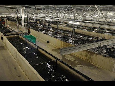 RAS Technology (German Aquaculture Farm)