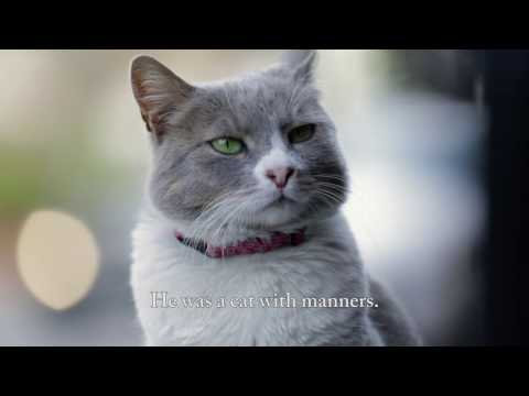 Meet Duman, the Purrfect Gentleman - KEDI