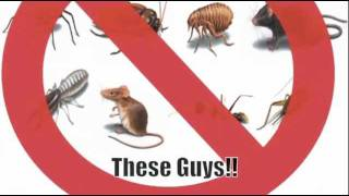 Pest Control Bakersfield - Advanced Pest Control in Bakersfield CA