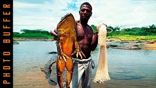 WORLD'S BIGGEST FROGS