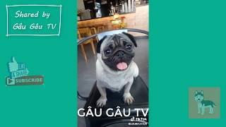 Tập 9: Chó Pug mặt xệ hài hước và đáng yêu nhất | Funny and Cute Pug Compilation
