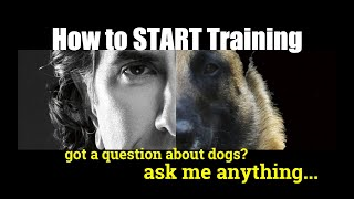 How to BEGIN TRAINING my DOG! ask me anything