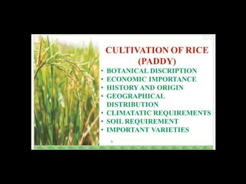 Cultivation Of Rice Part 1