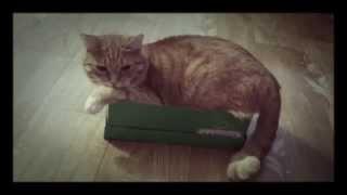 Смешные котята. Смотреть смешное видео про котят. Милый рыжий кот.