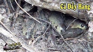 Tát Đìa Bắt Cá Đầu Vụ Đông Xuân Cá Rô Cá Lóc Đầy Cả Hang | FISHING | NGÃ NĂM TV