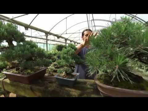 decogarden jardiner a formas y estilos de bons i youtube On decogarden jardineria
